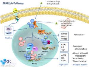 pparbeta-pathway-2-2