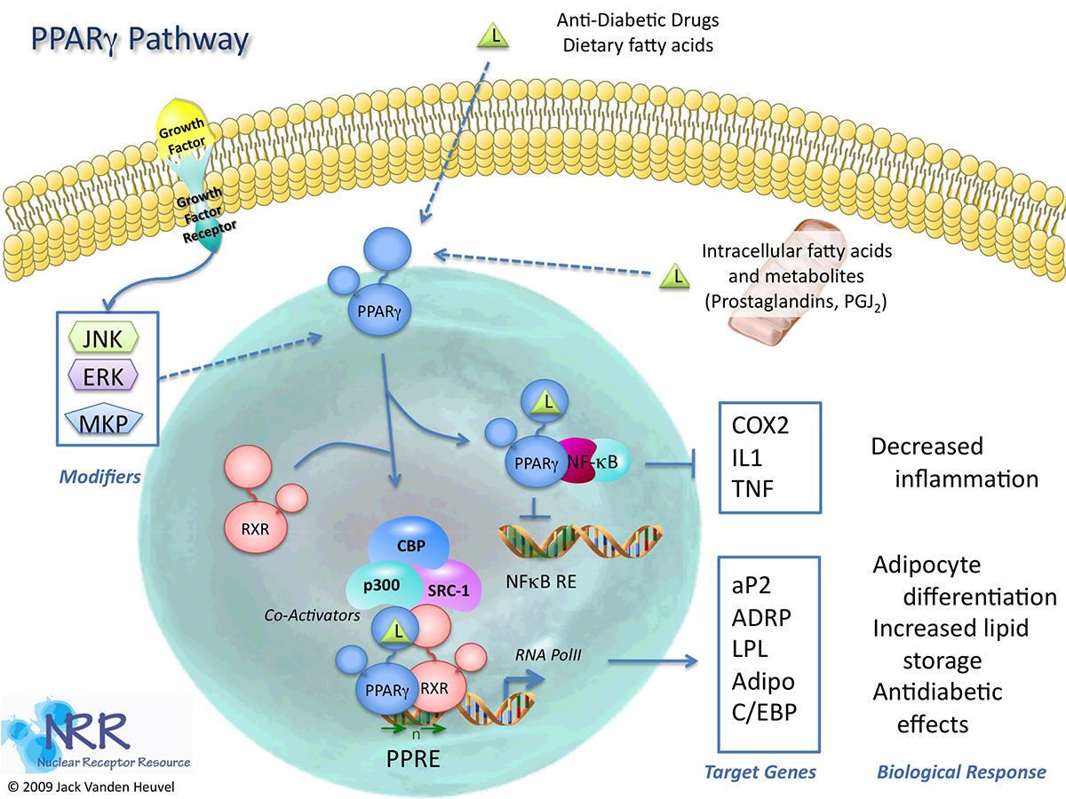 3 alpha hydroxysteroid dehydrogenase deficiency
